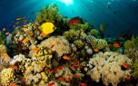 Reef corals (Muir et al, 2015)